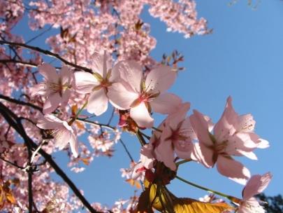 spring211
